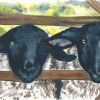 Animal Card Set thumbnail