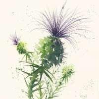 Flower Card Set thumbnail
