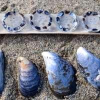 Mussel Shell Buttons thumbnail