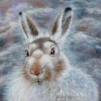 Mountain Hare Greetings Card thumbnail