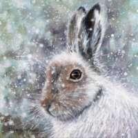 Snow Hare Canvas Print thumbnail