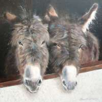 Stable Companions Giclee Print thumbnail