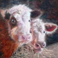 Calves Canvas Print thumbnail