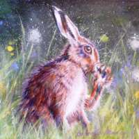 Brown Hare Washing Paw thumbnail