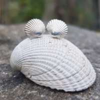 Cockle Shell Studs thumbnail