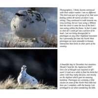 Highland Wildlife - Through my Lens thumbnail