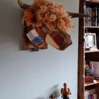 Angus the Highland Cow Head thumbnail