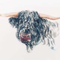 Highland Bull Print thumbnail