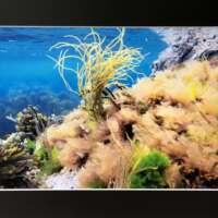 Underwater Seaweed Scene in Shetland thumbnail