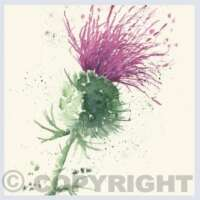 Pack of 5 Square Thistle Cards thumbnail