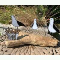 Seagulls on Driftwood Plank thumbnail
