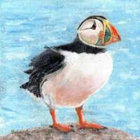 Puffin Canvas Print thumbnail