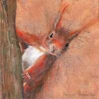 Red Squirrel Canvas Print thumbnail