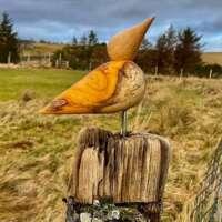 Single Oak Bird on Driftwood thumbnail