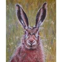 Brown Hare XXXV thumbnail