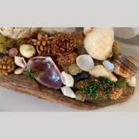 Shells and Gems thumbnail