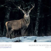 2021 Highland Wildlife Calendar thumbnail