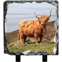 Highland Cow Slate thumbnail