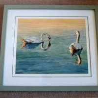 Lochter Swans thumbnail