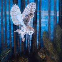 Beautiful Barn Owls Card Pack thumbnail