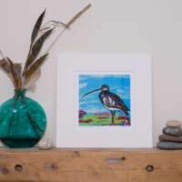 Lone Curlew thumbnail