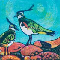 Peewits and Pebbles thumbnail