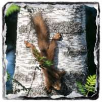 Set of 4 Wildlife Slate Coasters thumbnail