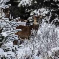 Set of 5 Wildlife cards thumbnail