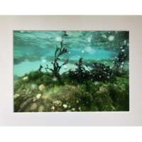 Underwater Seaweed with Bubbles in Shetland thumbnail