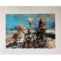 Swaying Seaweed Underwater in Shetland thumbnail