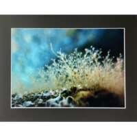 Underwater Flowers in Shetland thumbnail