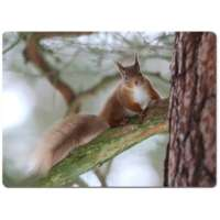 Red Squirrel Work Top Protector thumbnail