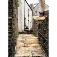 Stromness Up Close 3 thumbnail