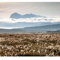 Suilven & Bog Cotton thumbnail