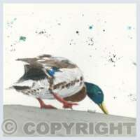 Pack of 5 Square Bird II Cards thumbnail