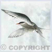Pack of 5 Square Bird Cards thumbnail