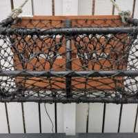 Walnut Lobster Pot Garden Planter thumbnail