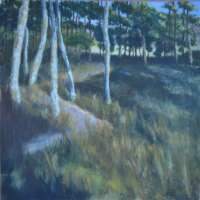 Woods at Tarland thumbnail
