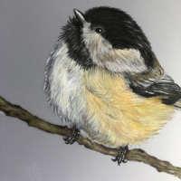 Chickadee - Original Pencil Drawing thumbnail