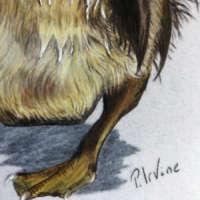 Duckling - Original Pencil Drawing thumbnail