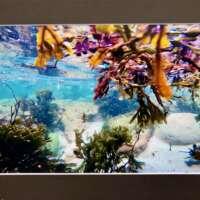 Underwater Photo at Gulberwick Beach 2 thumbnail