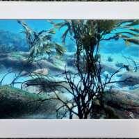 Underwater Photo at Gulberwick Beach 1 thumbnail