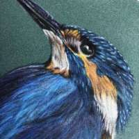 Kingfisher - Original Pencil Drawing thumbnail