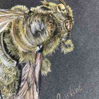 Bee - Original Pencil Drawing thumbnail