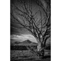 Tree, Ashaig, Isle of Skye - A4 thumbnail