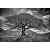 Wee Tree, Torrin, Isle of Skye - A4 thumbnail